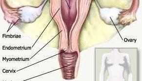 تنظيف الرحم وقت الدورة جابر القحطاني
