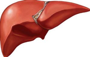 ارتفاع انزيمات الكبد هل هو خطير