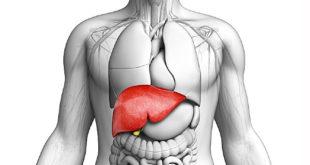 علاج فيروس الكبد بي الخامل بالعسل والاعشاب